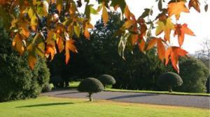 143_977_chris+wtts+autumn+colour+holly+walk_thumb_460x0,0