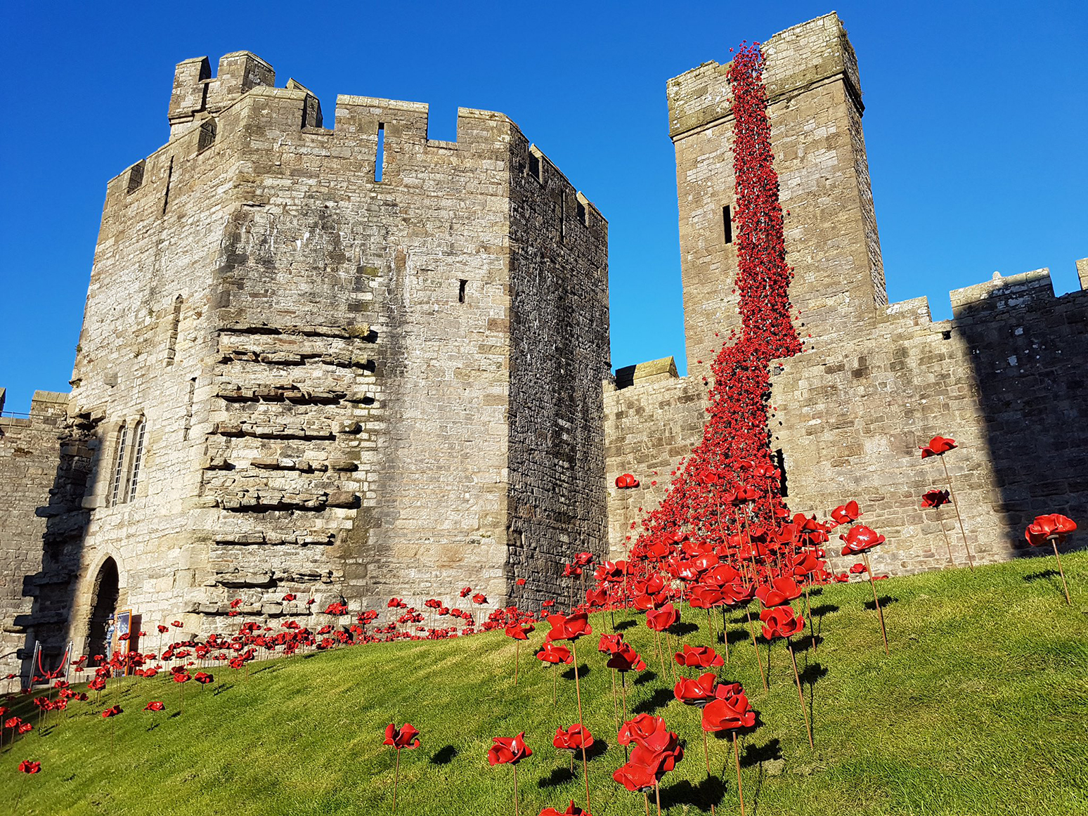 caernarfonpoppies4