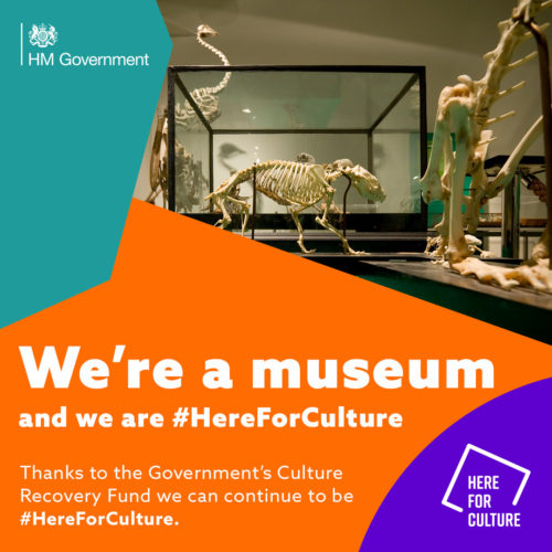 """We're a museum and we are here for culture"" text on a here for culture branded background with images of a museum exhibit"
